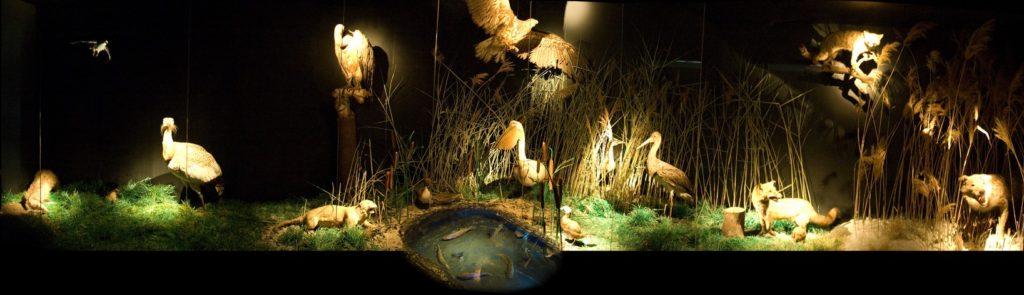Prirodnjačka postavka u Narodnom muzeju Zrenjanina