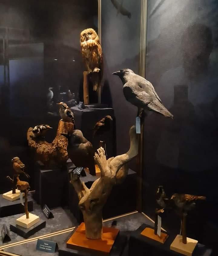 Prirodnački muzej u Beogradu - postavka stalna