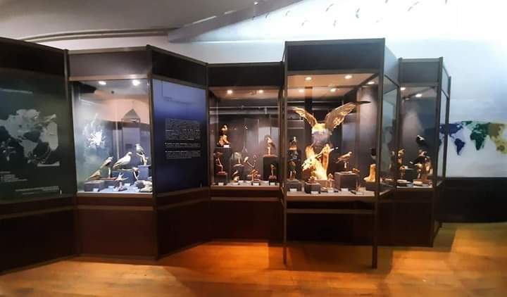Ptice - Prirodnjački muzej u Beogradu