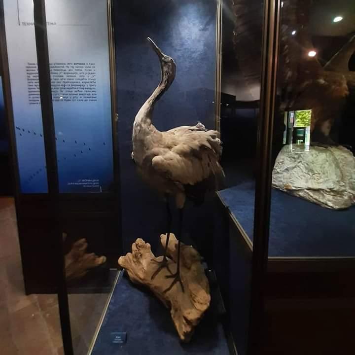 Izložba u Prirodnjačkom muzeju
