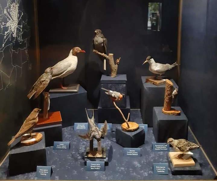 Stalna postavka Prirodnjačkog muzeja u Beogradu