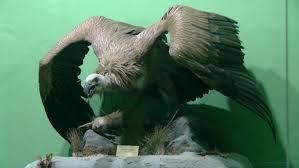 Ornitologija - Gradski muzej Vršac