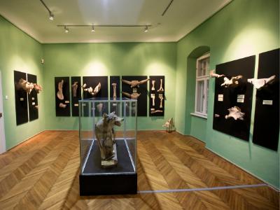 Gradski muzej Vršac, Apoteka na stepenicama, Prirodnjačka postavka, Muzeji za 10, 2021.