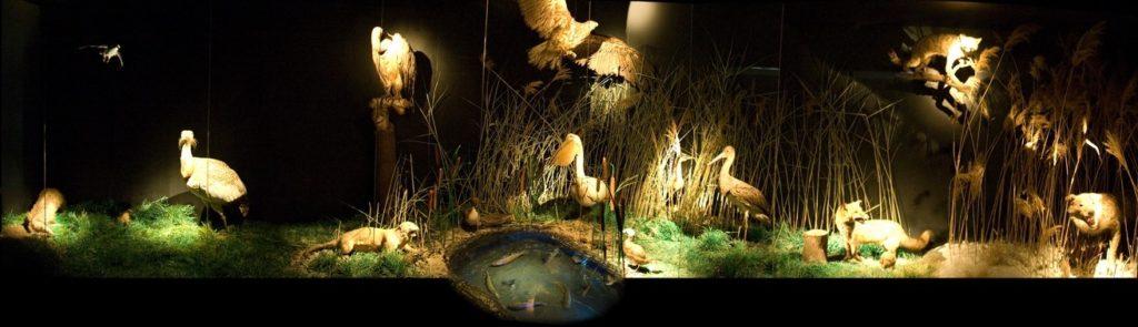 Prirodnjačko odeljenje Narodnog muzeja Zrenjanin - diorama