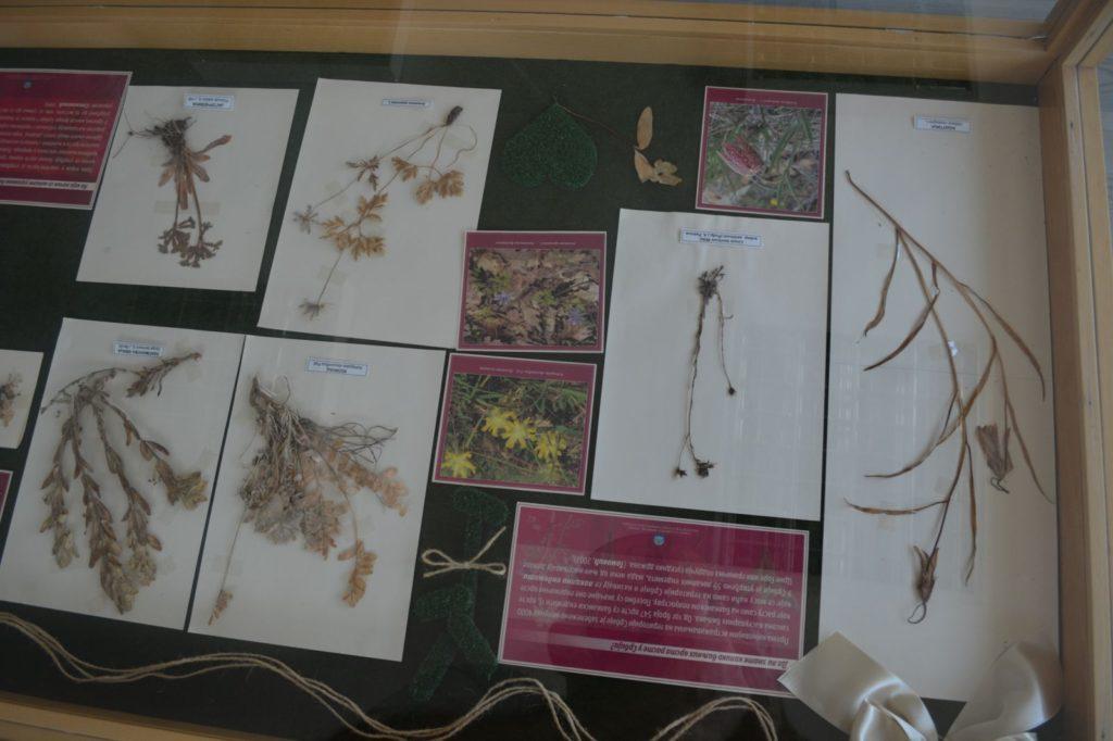 Postavka Zavoda za zaštitu prirode Srbije, biljke, Muzeji za 10, 2021