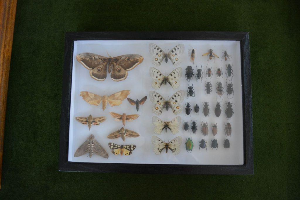 Postavka Zavoda za zaštitu prirode Srbije, leptiri, Muzeji za 10, 2021