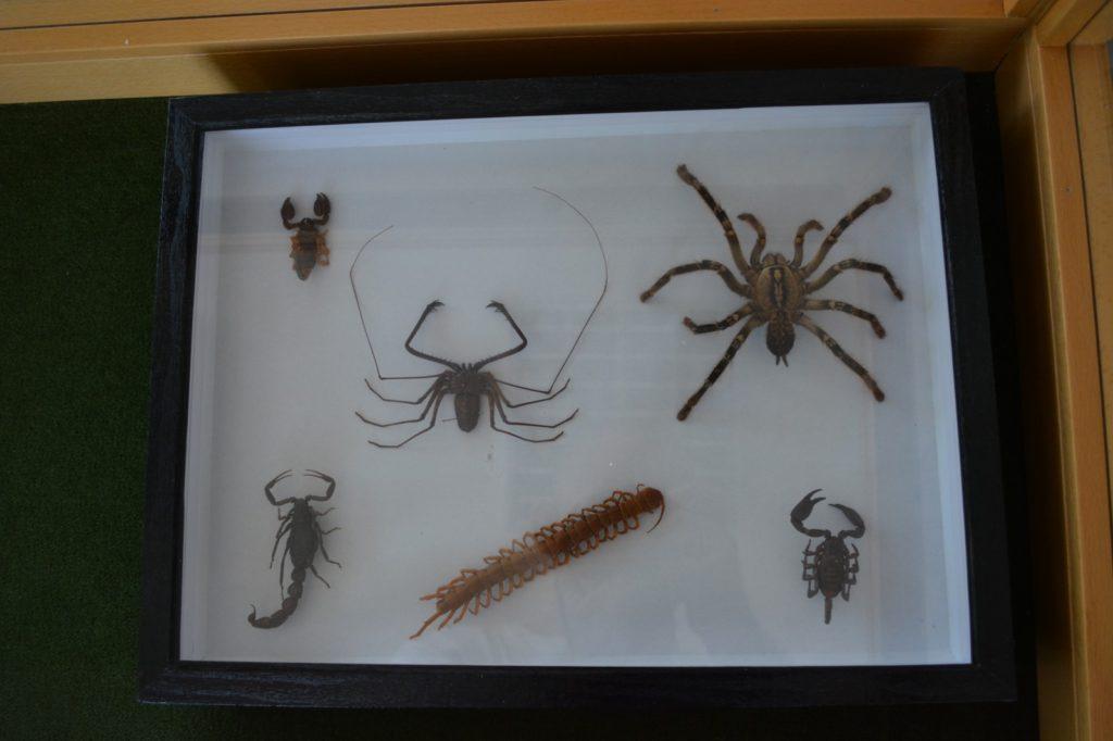 Postavka Zavoda za zaštitu prirode Srbije, pauci, Muzeji za 10, 2021