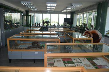 Izložbeni prostor Zavoda za zaštitu prirode Srbije, Manifestacija Muzeji za 10, 2021