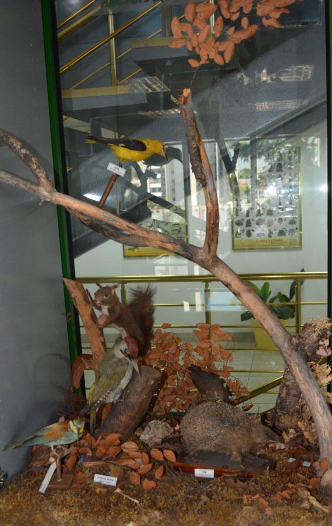 Postavka Zavoda za zaštitu prirode Srbije, veverica, Muzeji za 10, 2021