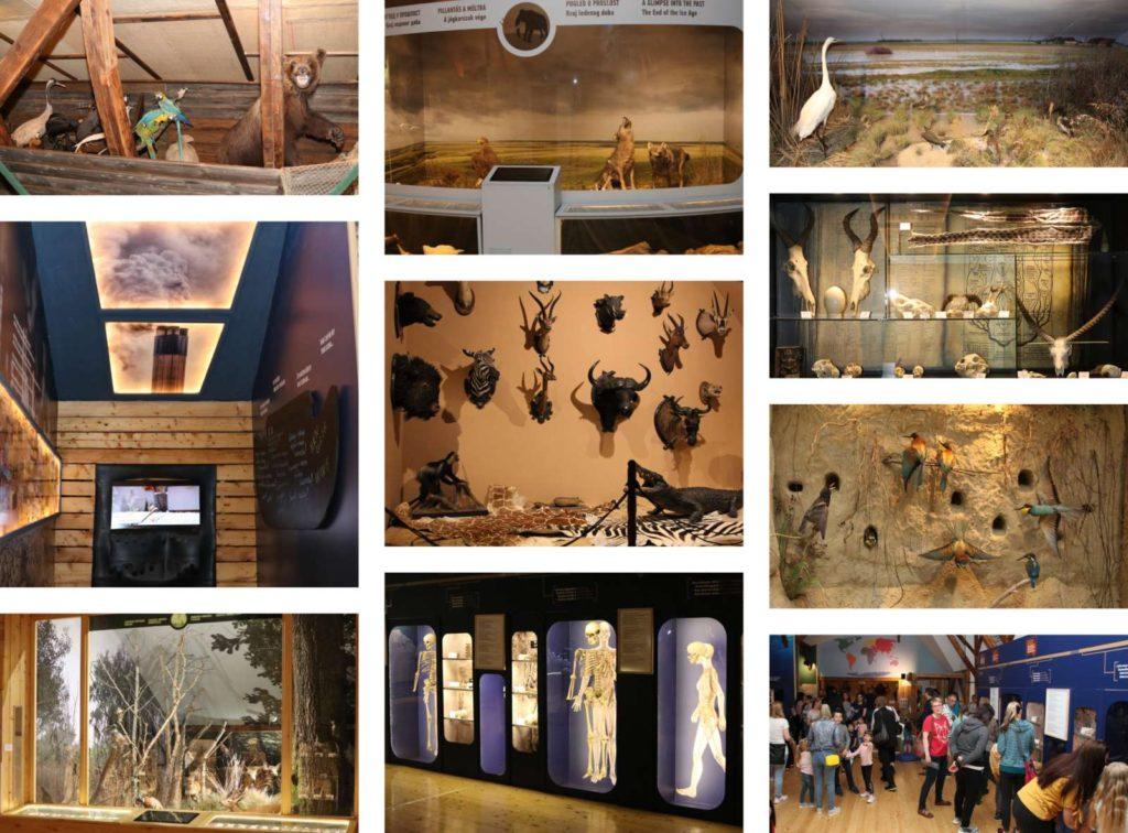 "Gradski muzej Subotica, stalna postavka ""Priroda i čovek"", Manifestacija Muzeji za 10, 2021."