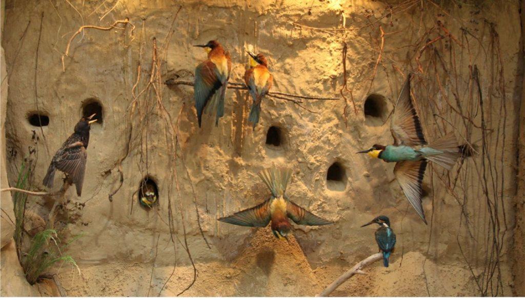 """Gradski muzej Subotica, stalna postavka """"Priroda i čovek"""", ptice, Manifestacija Muzeji za 10, 2021."""