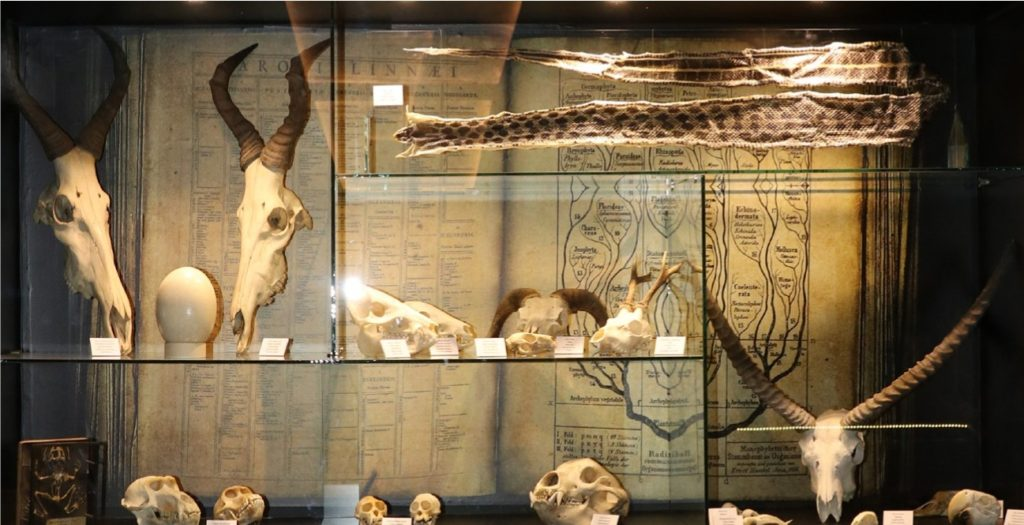 "Gradski muzej Subotica, stalna postavka ""Priroda i čovek"", sisari, Manifestacija Muzeji za 10, 2021."
