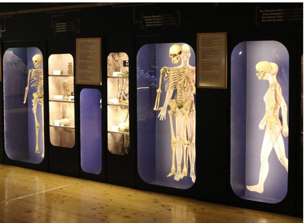 "Gradski muzej Subotica, stalna postavka ""Priroda i čovek"", skelet čoveka, Manifestacija Muzeji za 10, 2021."