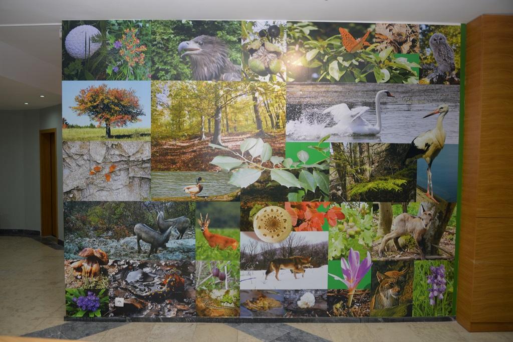 """Nacionalni park Đerdap, """"Muzeji za 10"""", 2021. godine, izložbeni eksponati"""